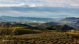 Campos de Alora